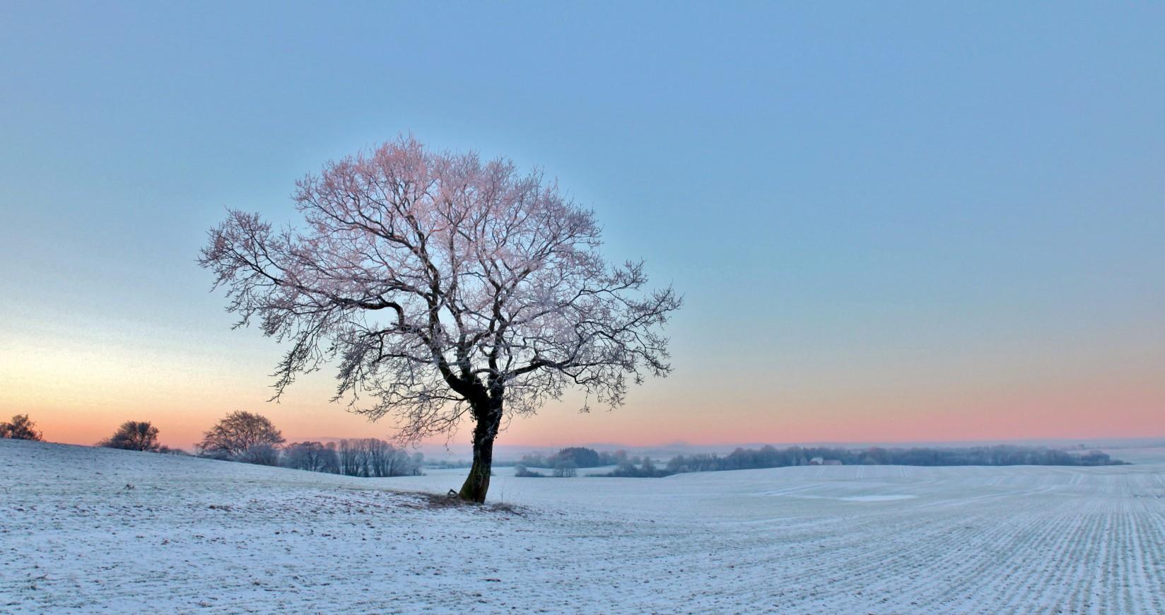 Viggo Hjort Kohberg - Det enesomme træ i skumringen på en mark Over Kestrup