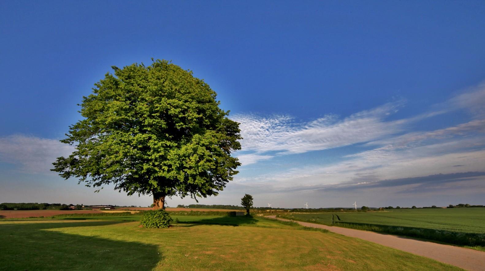 Viggo Hjort Kohberg - Det gamle træ i Grarup